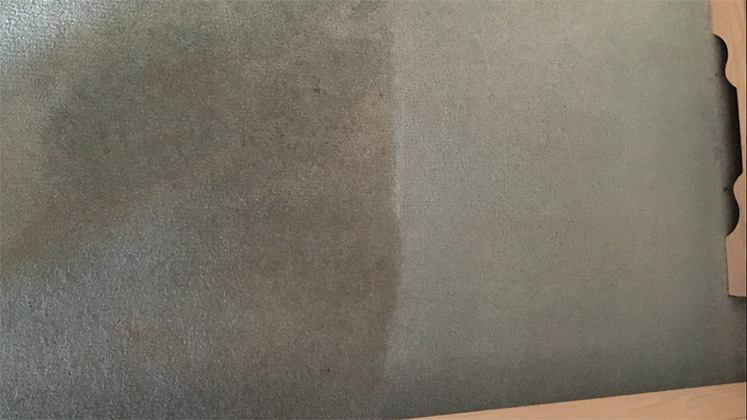 carpet cleaning experts
